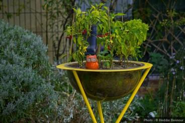 Piment du Jardin Enchanté