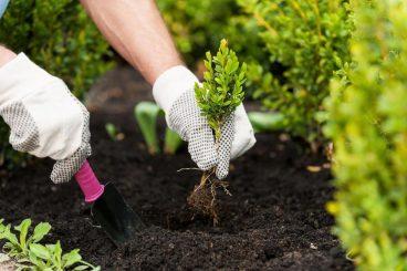 Travailler le sol - Plantoir
