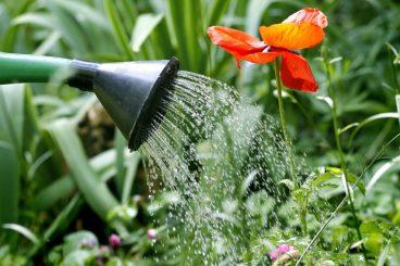 Les outils du jardinier - Arrosoir