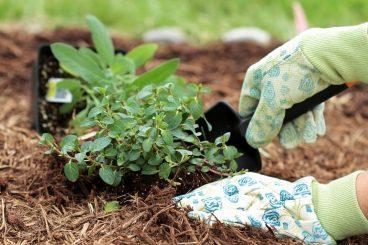Plantation travailler au jardin avec des gants