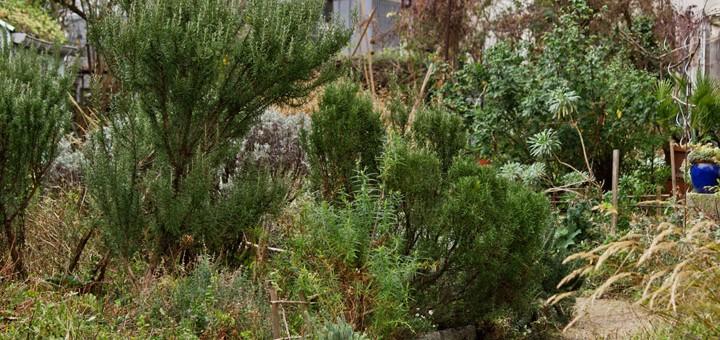 Petit passage au jardin Leroy sème - 75020