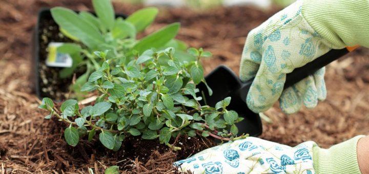 Les outils du jardinier 10