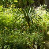 Visite du jardin partagé Saint-Serge 1