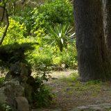 Visite du jardin partagé Saint-Serge 12
