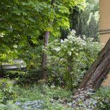 Visite du jardin partagé Saint-Serge 11