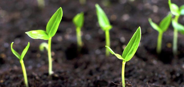 Associations des plantes pour le potager