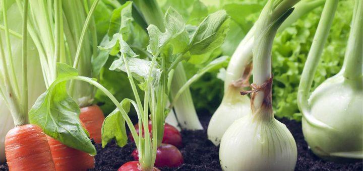 Associations des plantes pour le potager 1